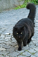 Black cat on the paving