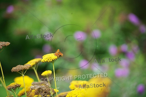 Flowers, plants, background