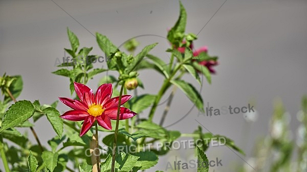 Flowers, plants, background, Wilhelma, Stuttgart