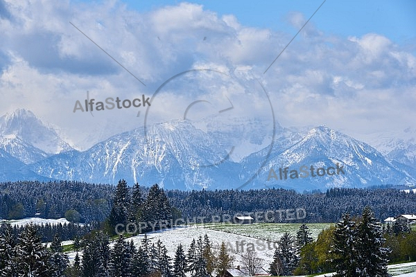 Spring, Flower, Snow, Allgäu, Bavaria, Germany