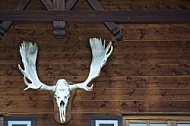 Stag wall decor