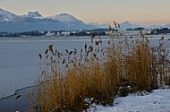 Winter in the Lake Hopfensee, Germany