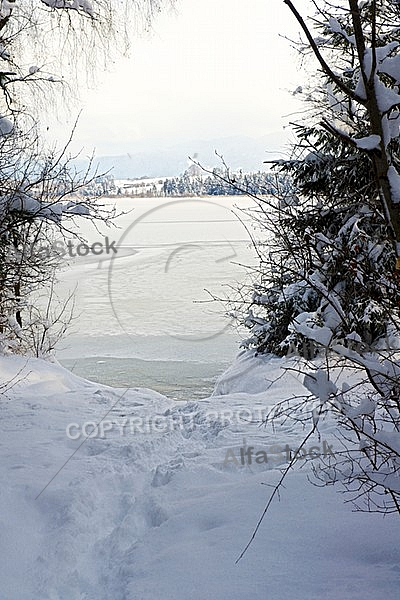 Winter, Snow, Wood, Background